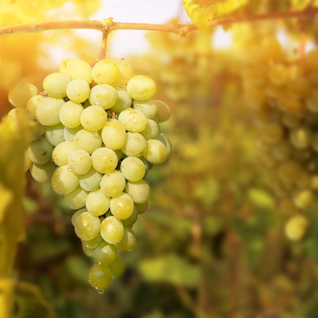 Домашние рецепты красоты. Зеленый виноград